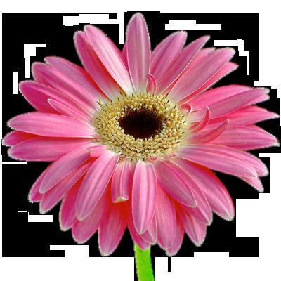 fleurs_montreal