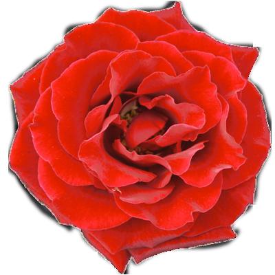 fleurs_montreal2