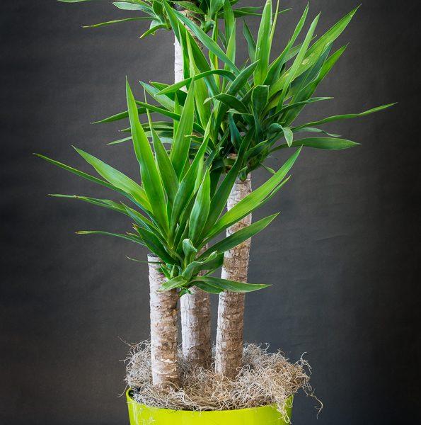 Plantes_Louis_XV-17