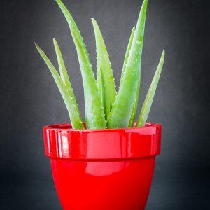 Plantes_Louis_XV-7