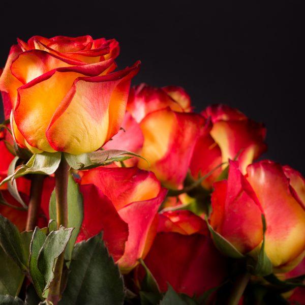 Fleurs_Louis_XV-10